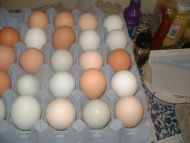 FREE RANGE HEN EGGS FOR EATING COLLECTION ONLY